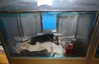 "Pet shop ""Life & Nature"