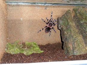 Pavouci - druhy terárií pro sklípkany